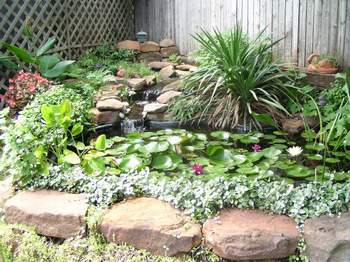Wingsinflight a garden pond add a pond to attract more for Plants for around garden ponds