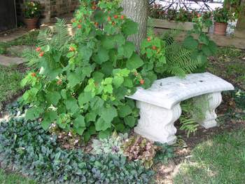Stone bench and Turkscap flower.
